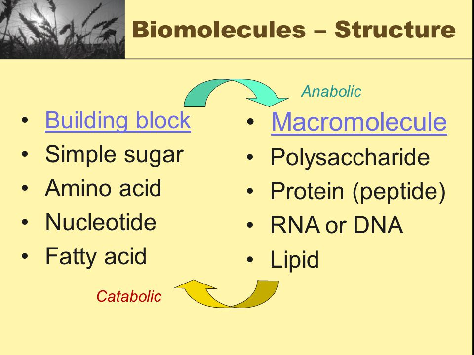 Biomolecules – Structure