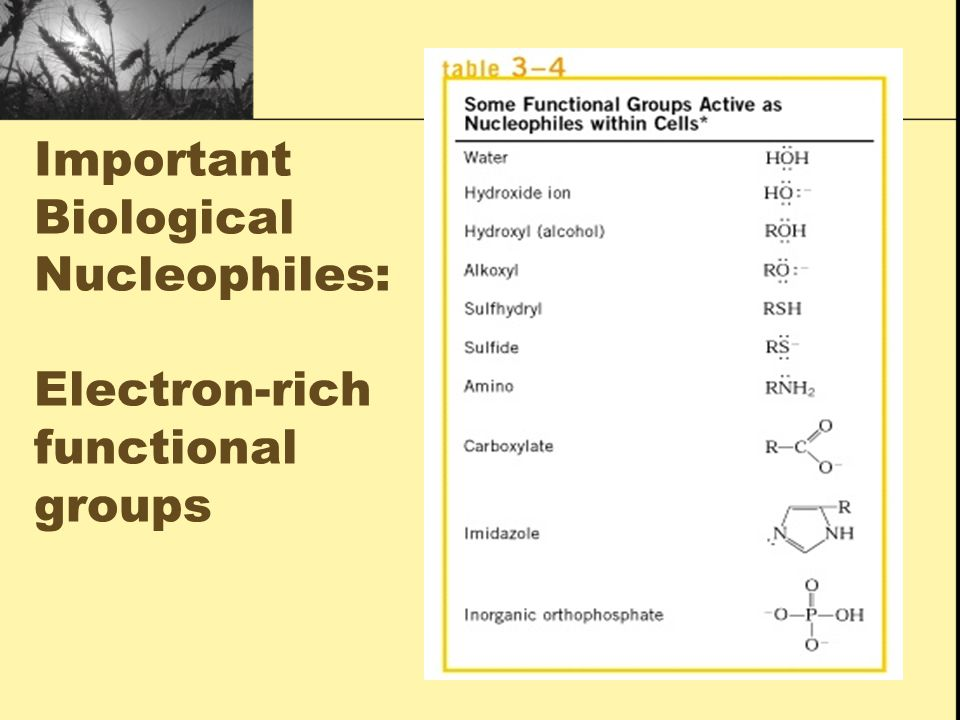 Important Biological Nucleophiles: Electron-rich functional groups