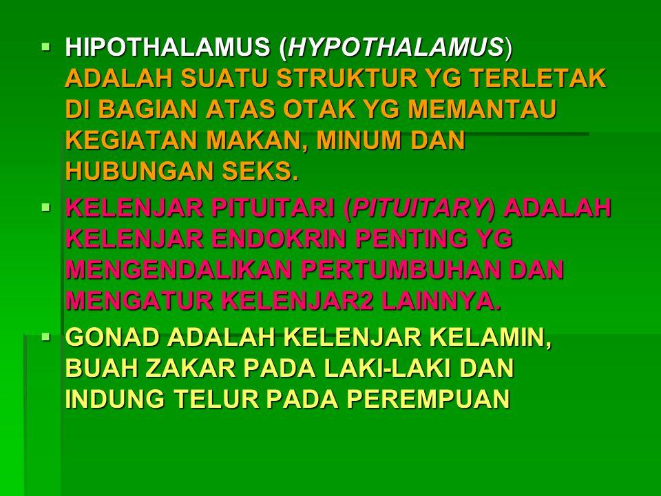 HIPOTHALAMUS (HYPOTHALAMUS) ADALAH SUATU STRUKTUR YG TERLETAK DI BAGIAN ATAS OTAK YG MEMANTAU KEGIATAN MAKAN, MINUM DAN HUBUNGAN SEKS.