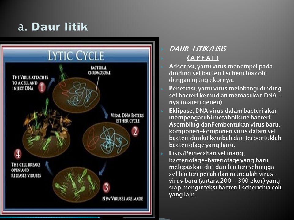 a. Daur litik DAUR LITIK/LISIS ( A P E A L )