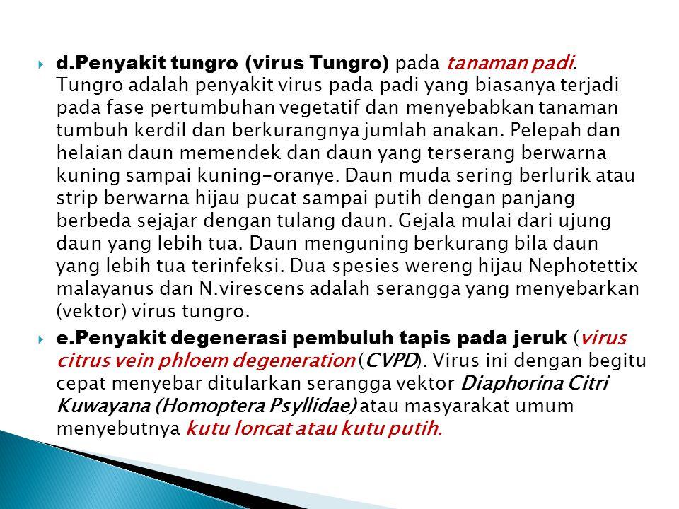 d. Penyakit tungro (virus Tungro) pada tanaman padi