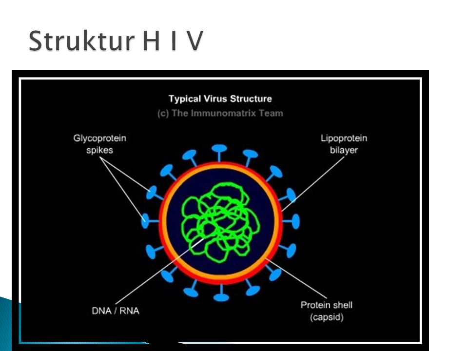 Struktur H I V