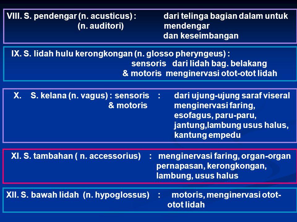 VIII. S. pendengar (n. acusticus) : dari telinga bagian dalam untuk