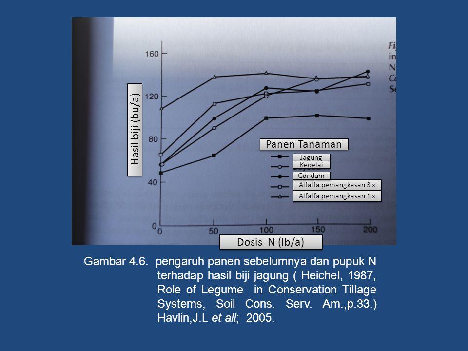 Hasil biji (bu/a) Panen Tanaman Dosis N (lb/a)