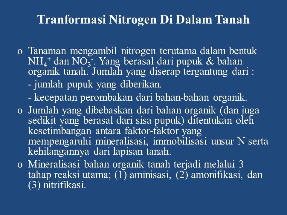 Tranformasi Nitrogen Di Dalam Tanah