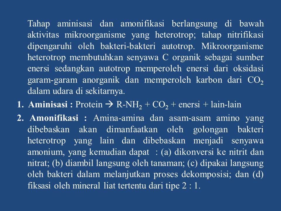 Tahap aminisasi dan amonifikasi berlangsung di bawah aktivitas mikroorganisme yang heterotrop; tahap nitrifikasi dipengaruhi oleh bakteri-bakteri autotrop.