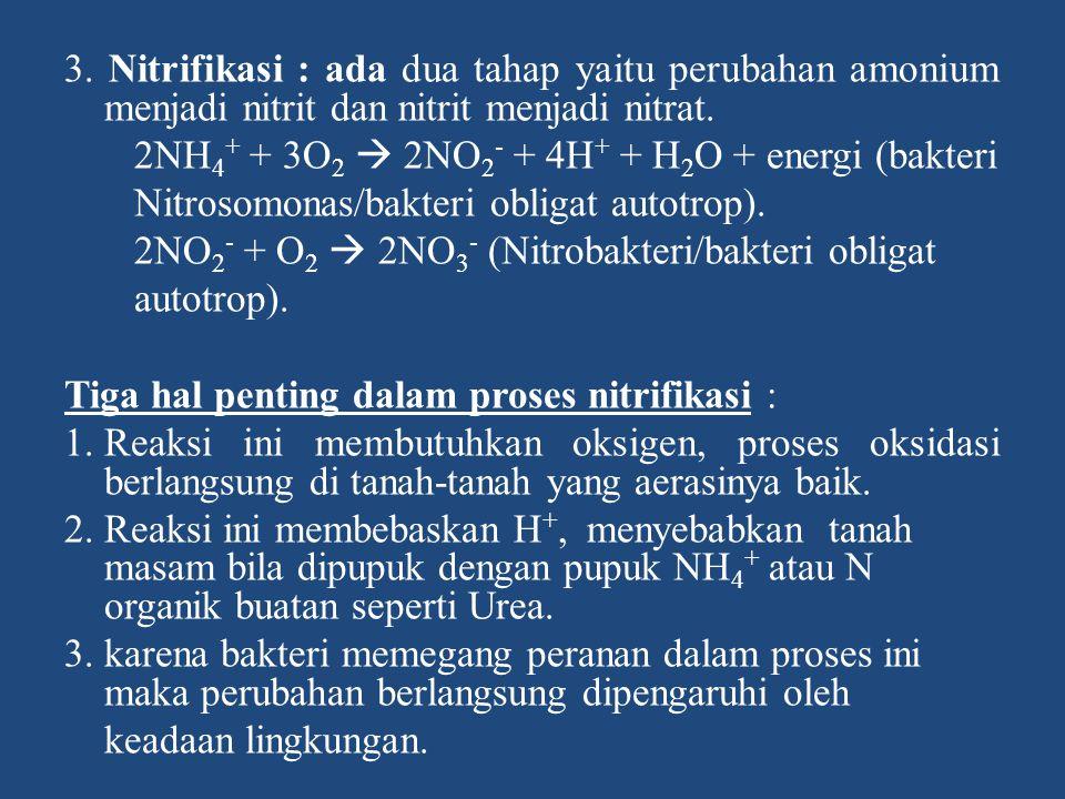 3. Nitrifikasi : ada dua tahap yaitu perubahan amonium menjadi nitrit dan nitrit menjadi nitrat.