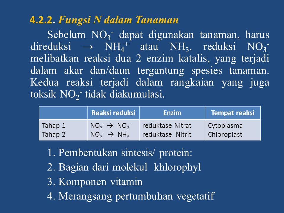 4.2.2. Fungsi N dalam Tanaman Sebelum NO3- dapat digunakan tanaman, harus direduksi → NH4+ atau NH3. reduksi NO3- melibatkan reaksi dua 2 enzim katalis, yang terjadi dalam akar dan/daun tergantung spesies tanaman. Kedua reaksi terjadi dalam rangkaian yang juga toksik NO2- tidak diakumulasi. 1. Pembentukan sintesis/ protein: 2. Bagian dari molekul khlorophyl 3. Komponen vitamin 4. Merangsang pertumbuhan vegetatif