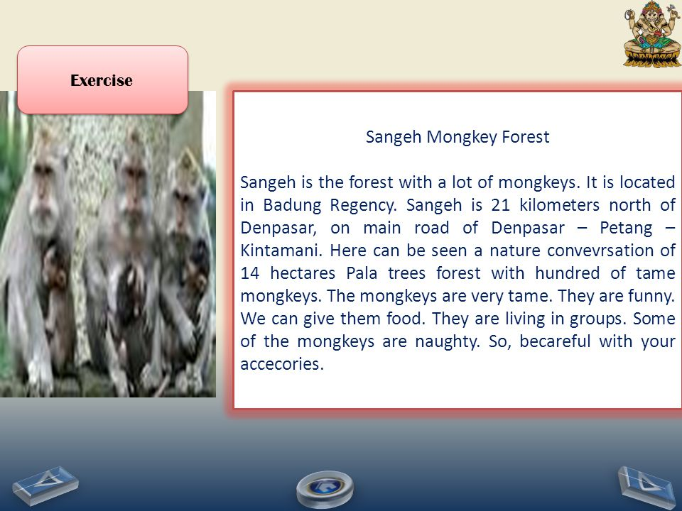 Exercise Sangeh Mongkey Forest.
