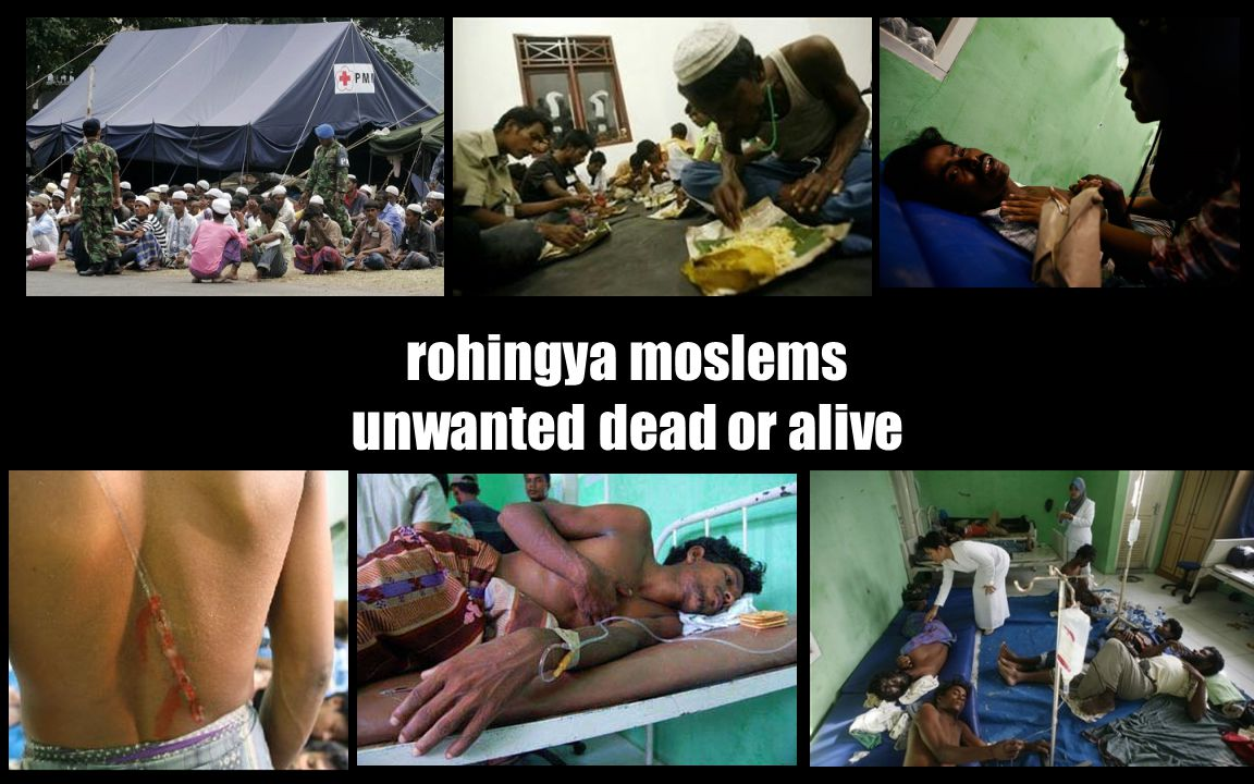 rohingya moslems unwanted dead or alive