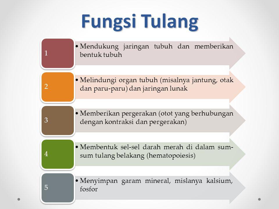 Fungsi Tulang 1 Mendukung jaringan tubuh dan memberikan bentuk tubuh 2