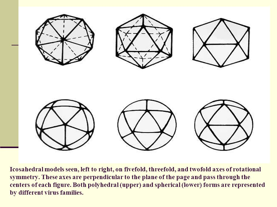 Icosahedral models seen, left to right, on fivefold, threefold, and twofold axes of rotational symmetry.
