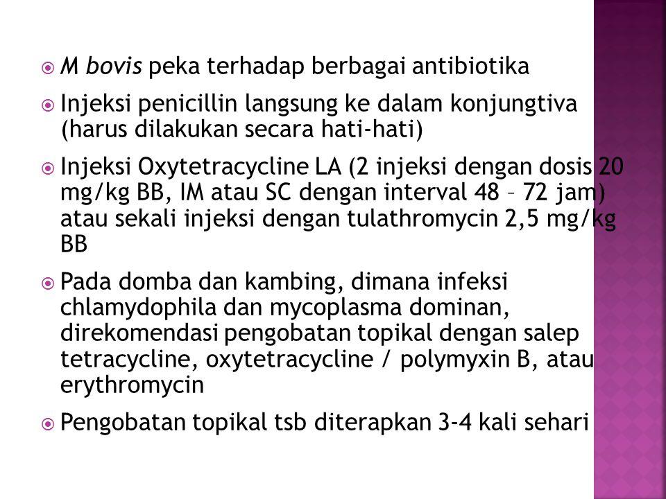 M bovis peka terhadap berbagai antibiotika