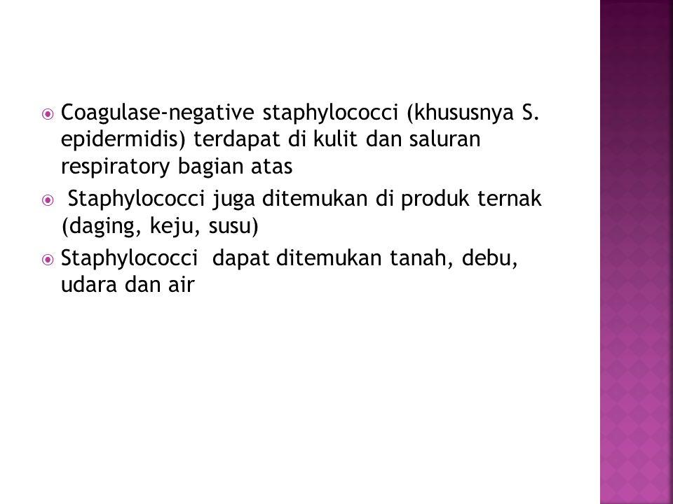 Coagulase-negative staphylococci (khususnya S