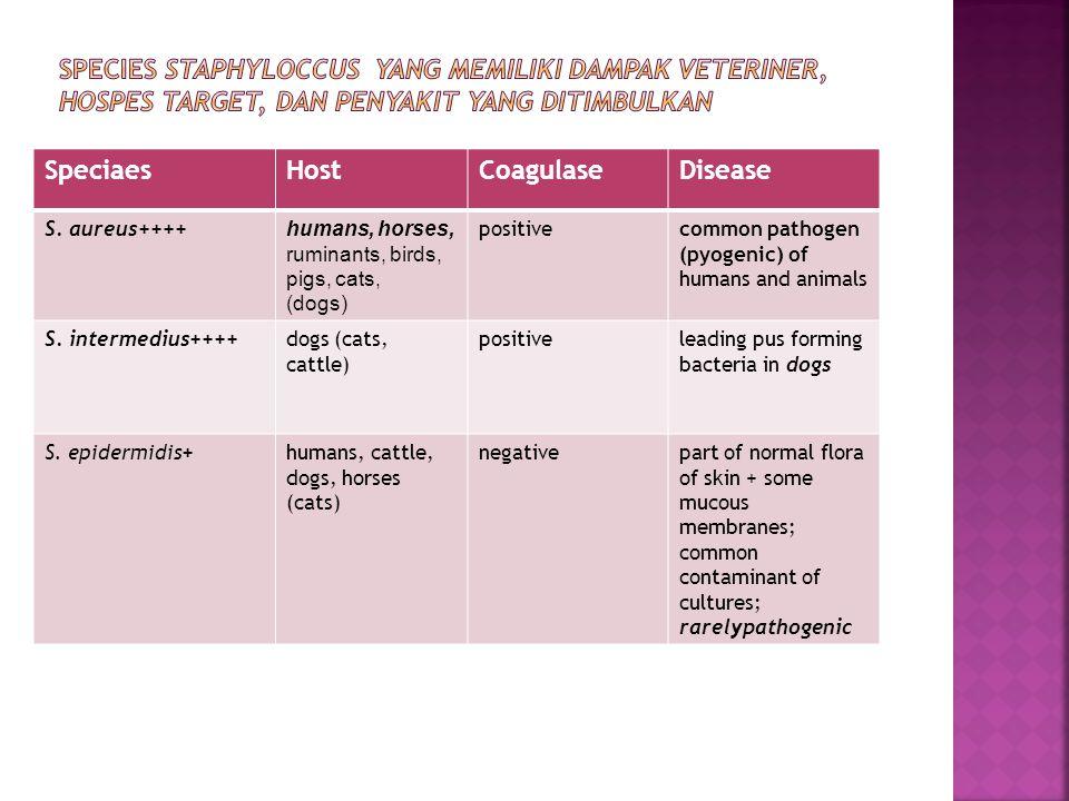 Species Staphyloccus yang memiliki dampak veteriner, hospes target, dan penyakit yang ditimbulkan