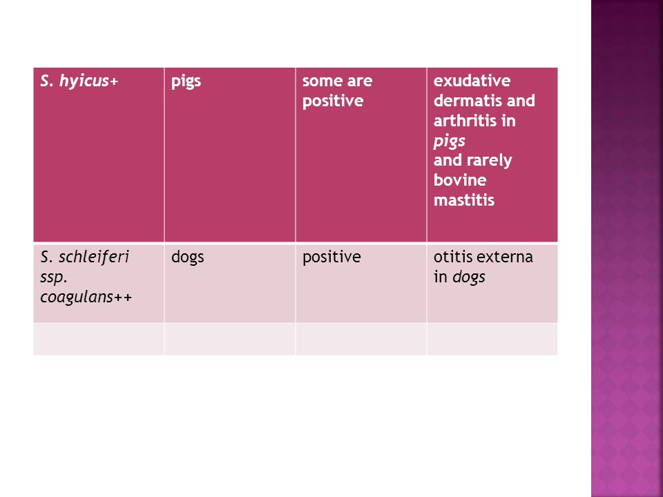 S. hyicus+ pigs. some are. positive. exudative dermatis and arthritis in pigs. and rarely bovine mastitis.