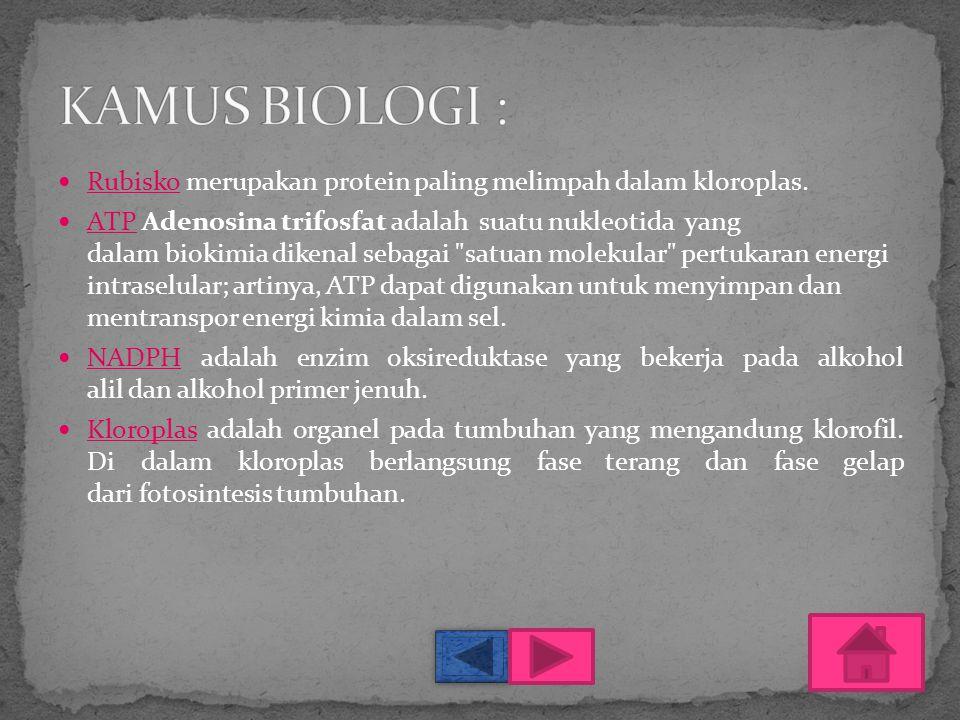 KAMUS BIOLOGI : Rubisko merupakan protein paling melimpah dalam kloroplas.