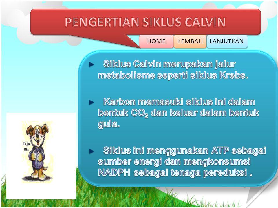 PENGERTIAN SIKLUS CALVIN
