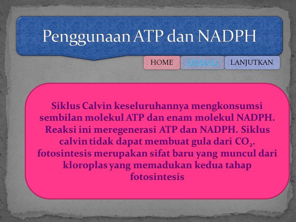 Penggunaan ATP dan NADPH