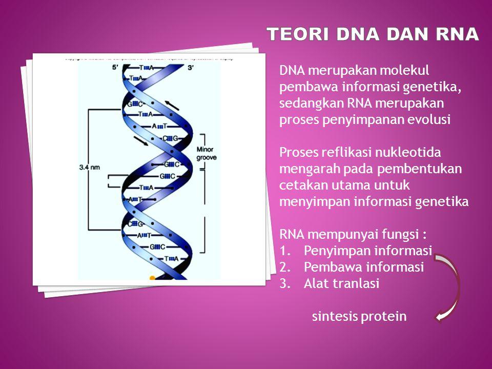TEORI DNA DAN RNA DNA merupakan molekul pembawa informasi genetika, sedangkan RNA merupakan proses penyimpanan evolusi.