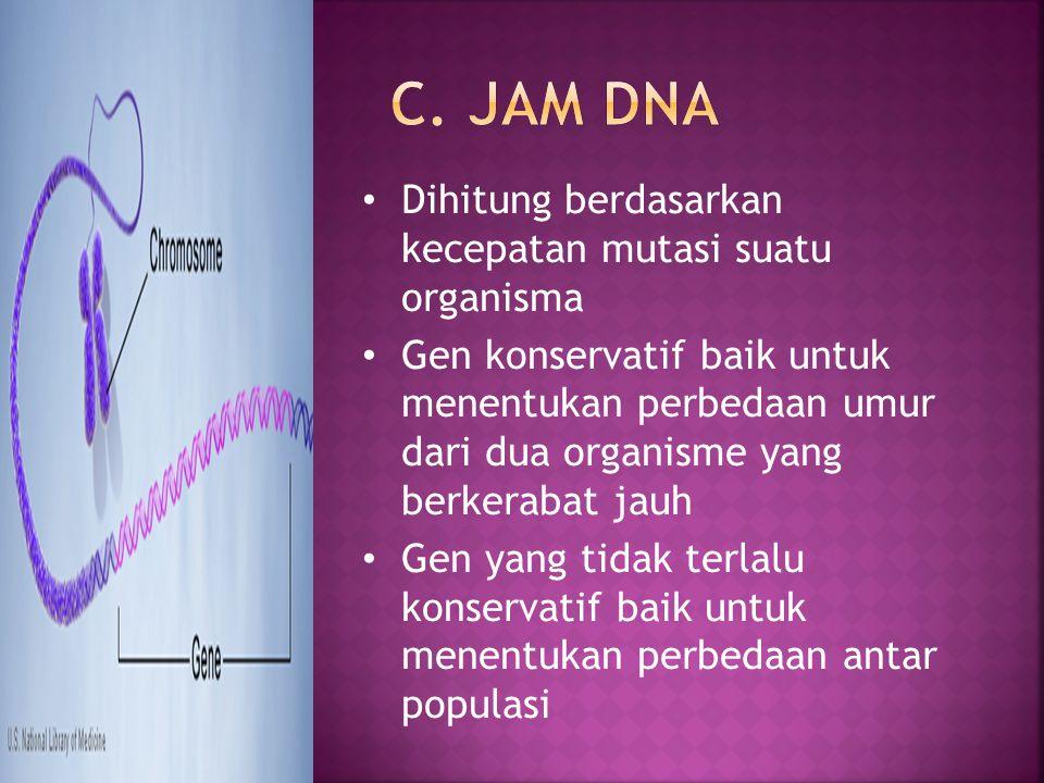 C. Jam DNA Dihitung berdasarkan kecepatan mutasi suatu organisma