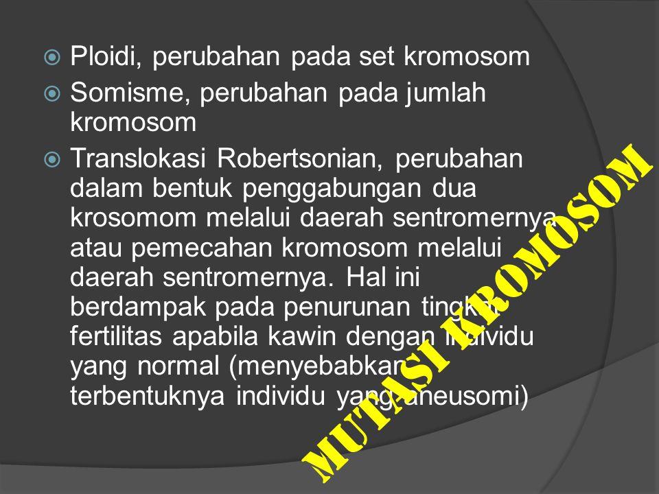 MUTASI KROMOSOM Ploidi, perubahan pada set kromosom
