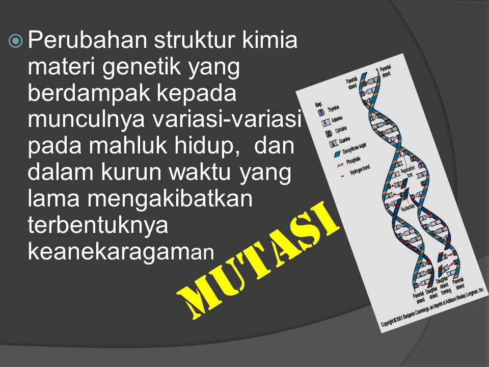 Perubahan struktur kimia materi genetik yang berdampak kepada munculnya variasi-variasi pada mahluk hidup, dan dalam kurun waktu yang lama mengakibatkan terbentuknya keanekaragaman
