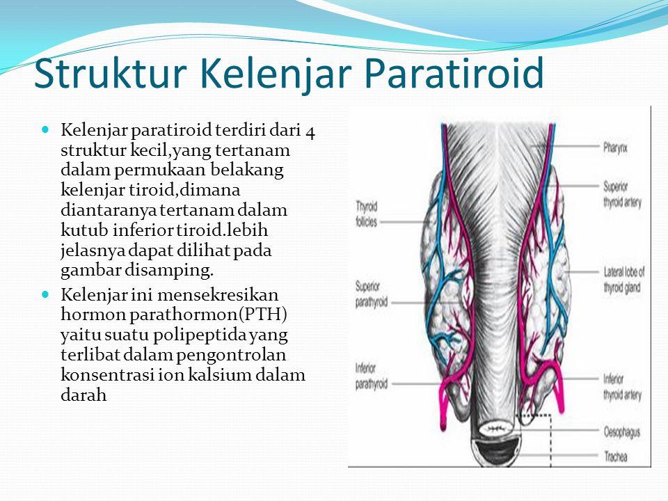 Struktur Kelenjar Paratiroid