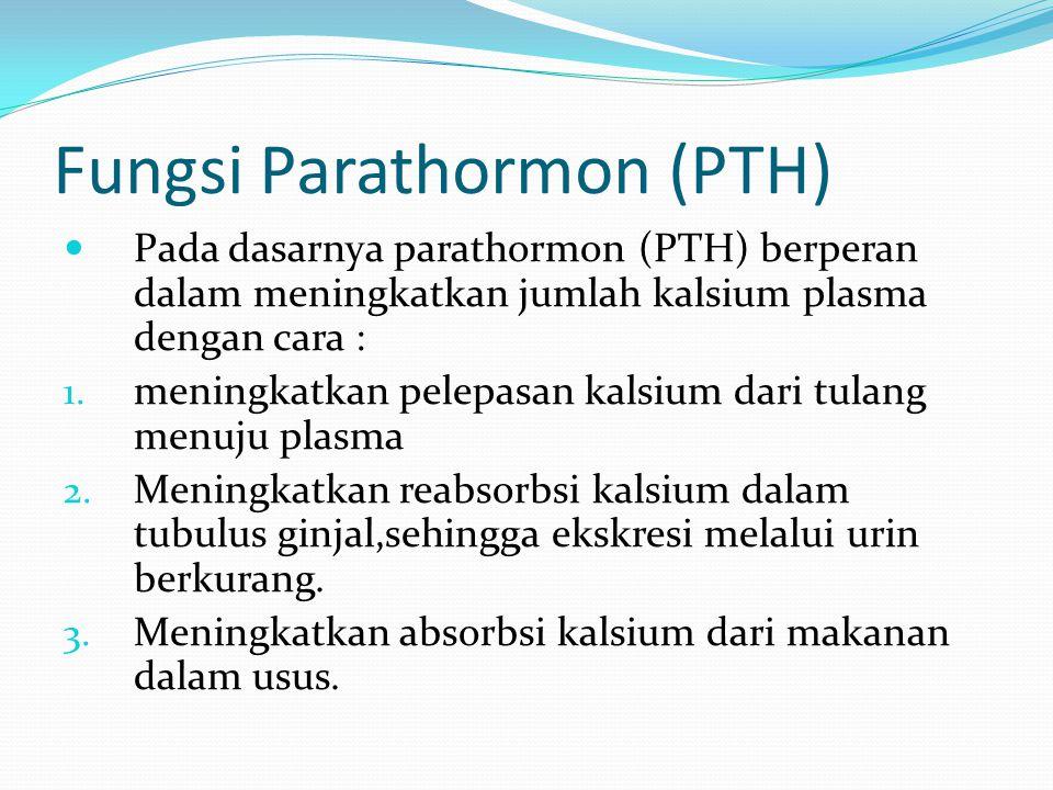 Fungsi Parathormon (PTH)