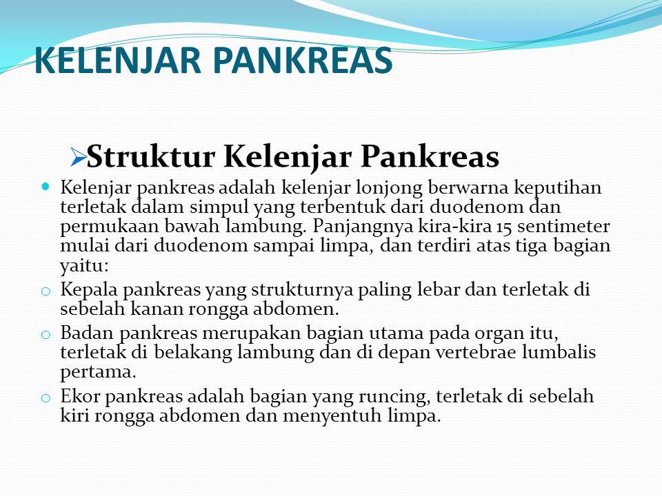 KELENJAR PANKREAS Struktur Kelenjar Pankreas