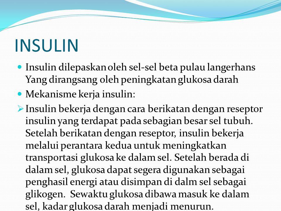 INSULIN Insulin dilepaskan oleh sel-sel beta pulau langerhans Yang dirangsang oleh peningkatan glukosa darah.
