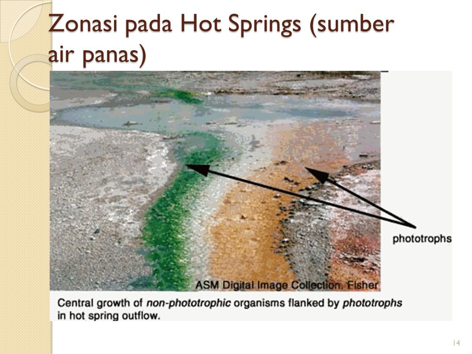 Zonasi pada Hot Springs (sumber air panas)