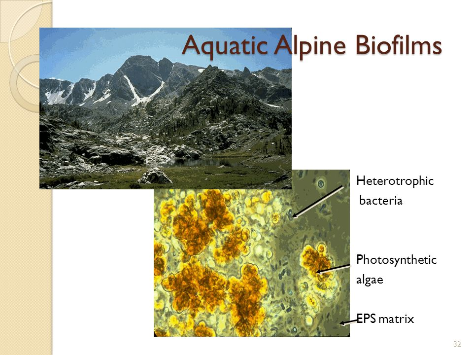 Aquatic Alpine Biofilms