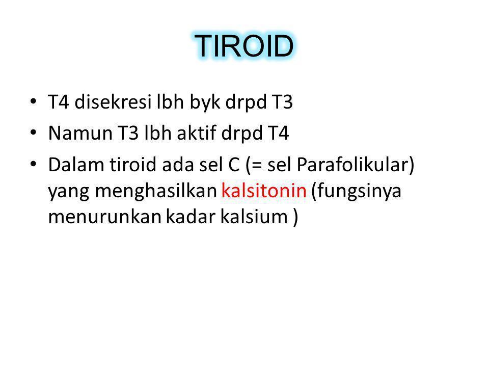 TIROID T4 disekresi lbh byk drpd T3 Namun T3 lbh aktif drpd T4