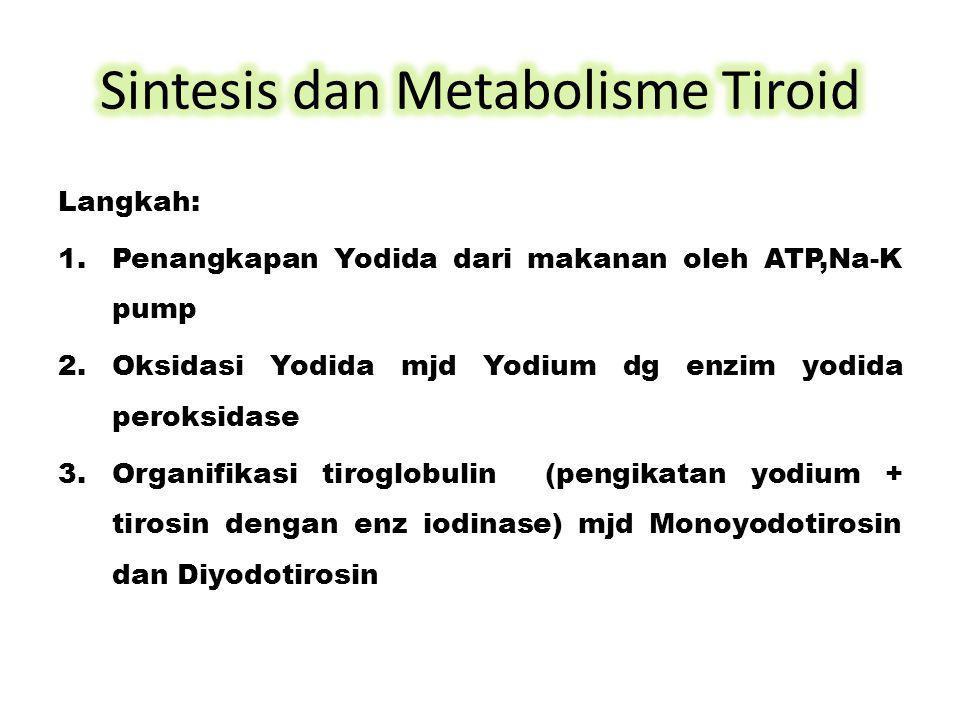 Sintesis dan Metabolisme Tiroid