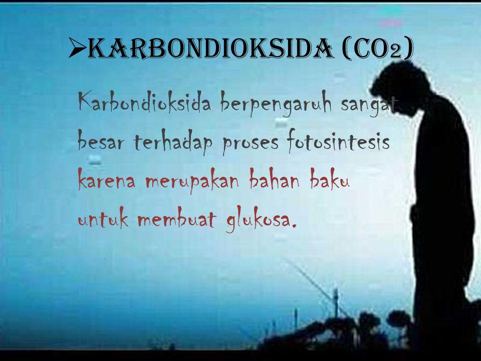 Karbondioksida (CO2) Karbondioksida berpengaruh sangat besar terhadap proses fotosintesis karena merupakan bahan baku untuk membuat glukosa.