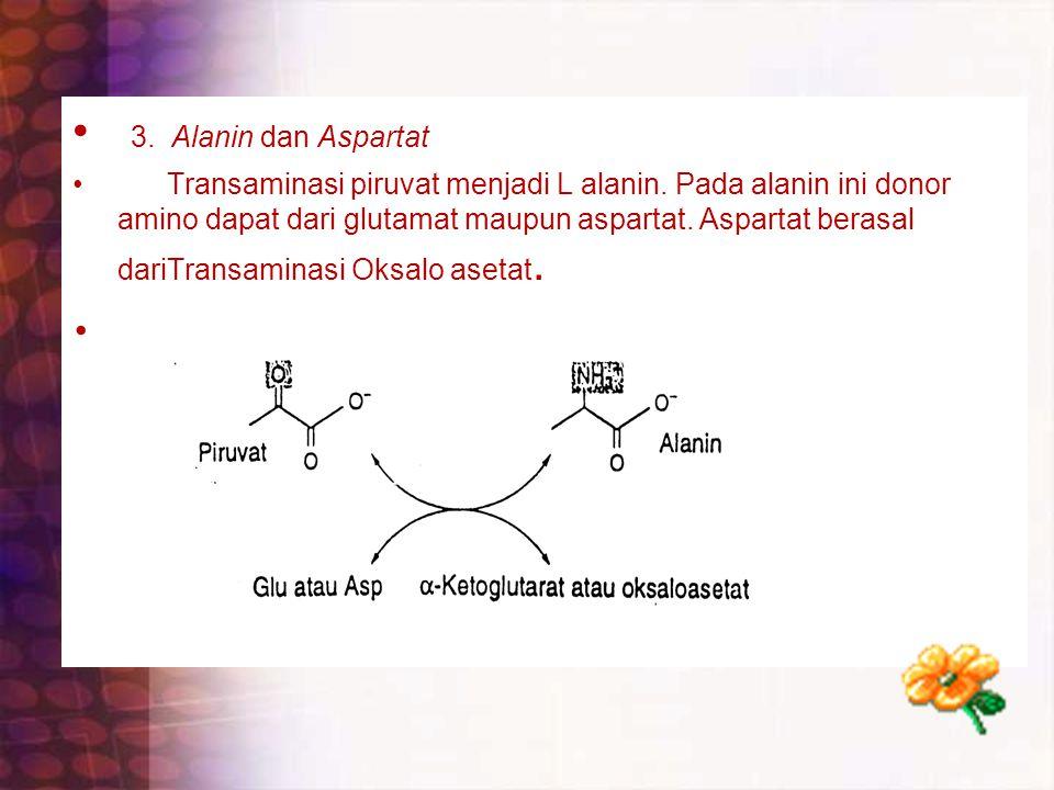 3. Alanin dan Aspartat