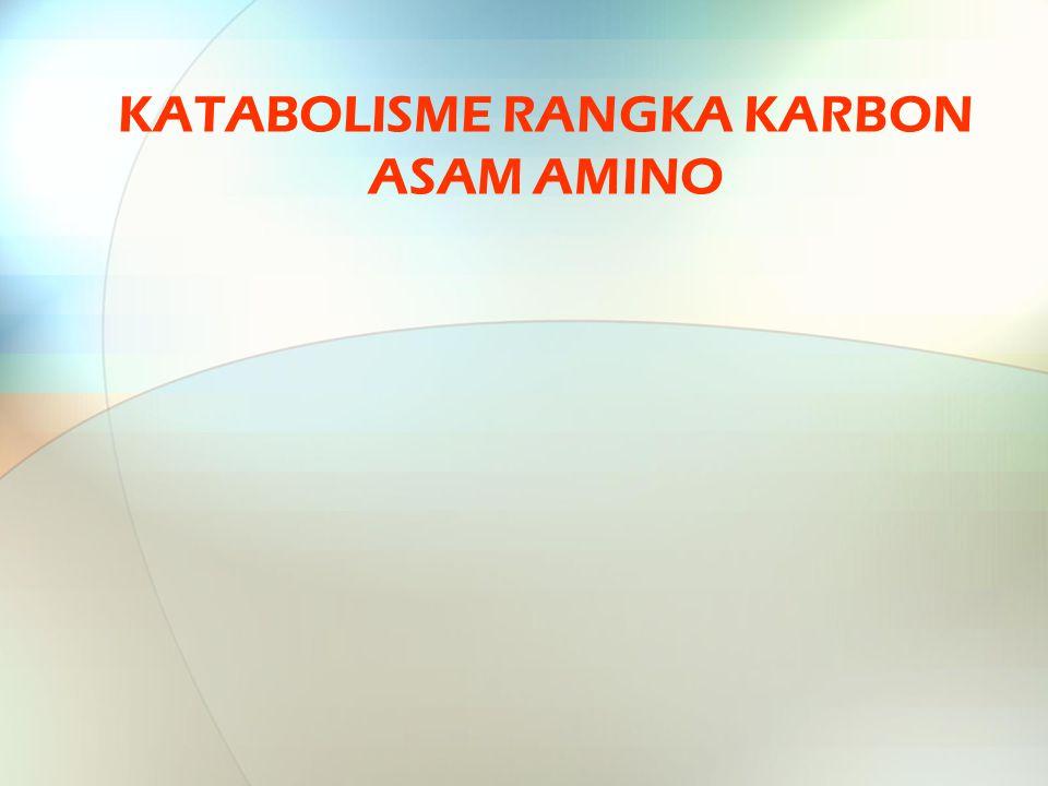 KATABOLISME RANGKA KARBON ASAM AMINO