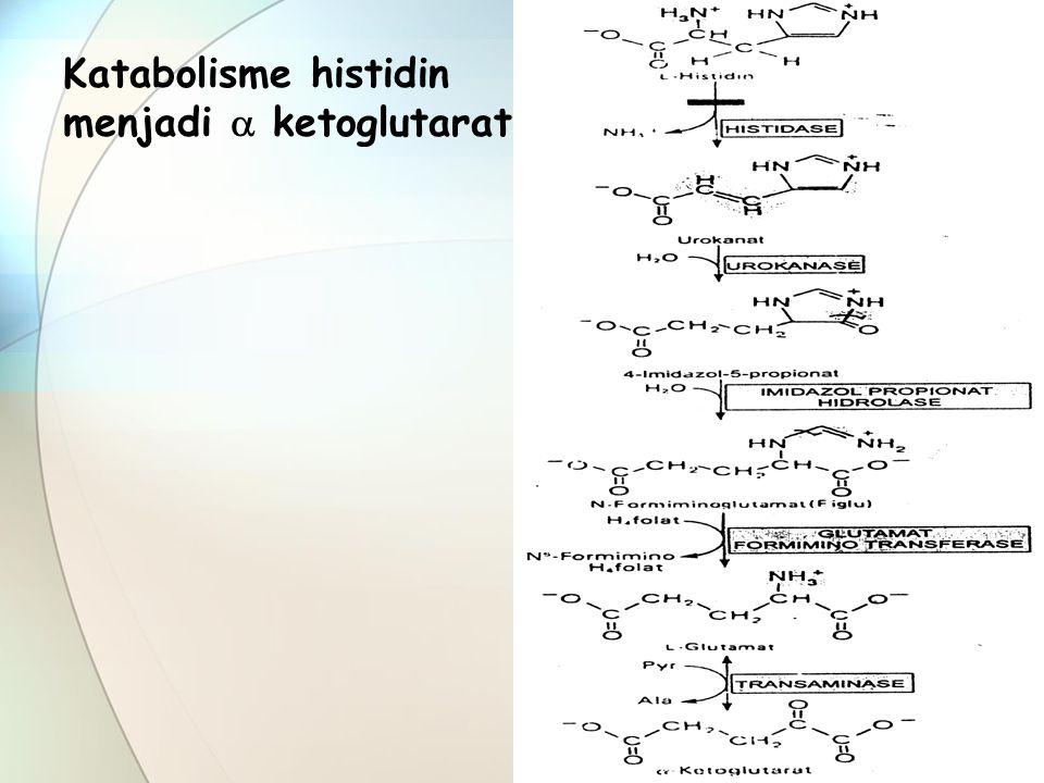 Katabolisme histidin menjadi  ketoglutarat