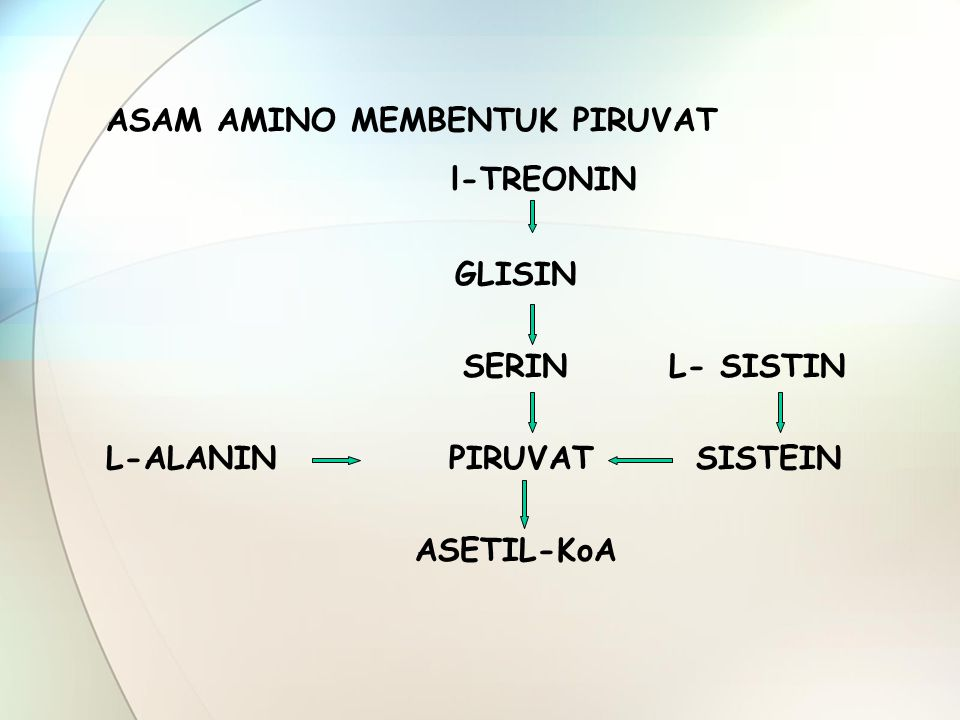 l-TREONIN ASAM AMINO MEMBENTUK PIRUVAT GLISIN SERIN L- SISTIN