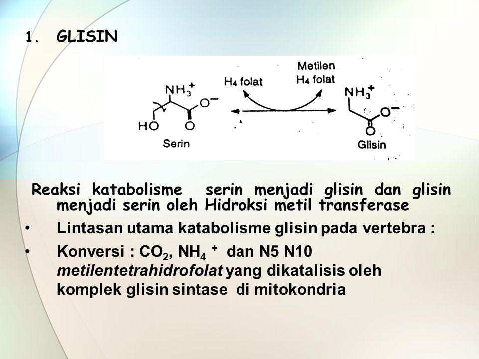 GLISIN Reaksi katabolisme serin menjadi glisin dan glisin menjadi serin oleh Hidroksi metil transferase.