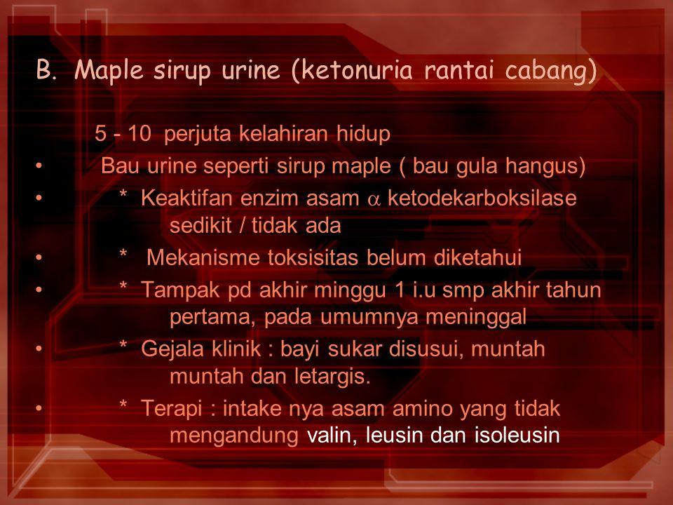 B. Maple sirup urine (ketonuria rantai cabang)