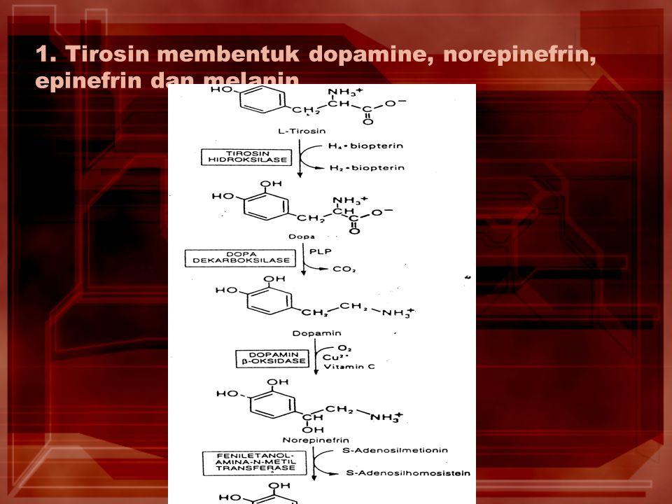 1. Tirosin membentuk dopamine, norepinefrin, epinefrin dan melanin