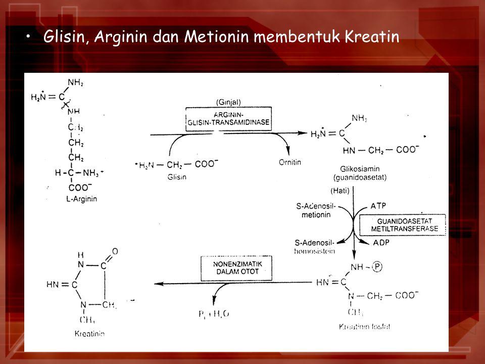 Glisin, Arginin dan Metionin membentuk Kreatin