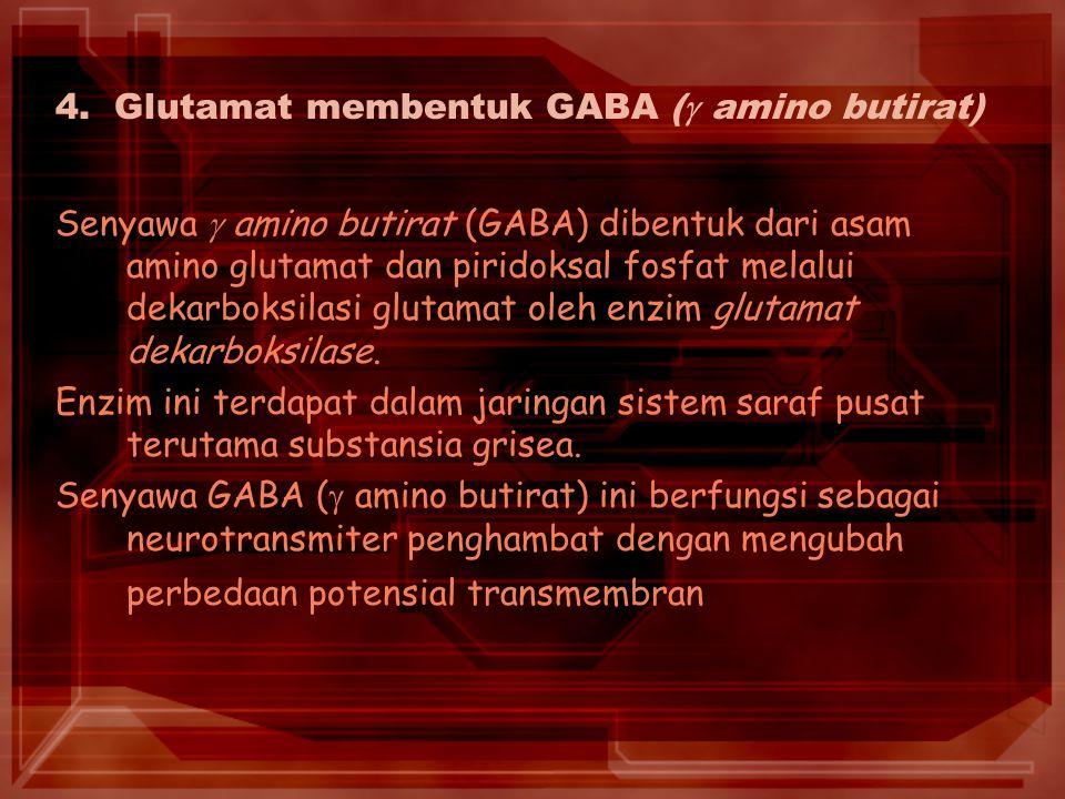 4. Glutamat membentuk GABA ( amino butirat)