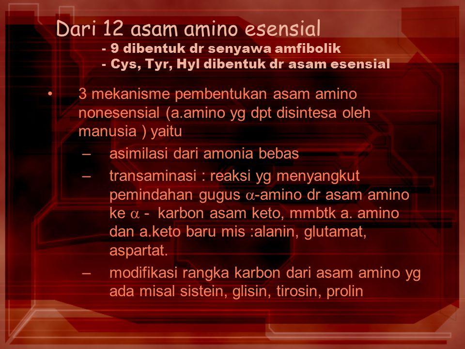 Dari 12 asam amino esensial. - 9 dibentuk dr senyawa amfibolik