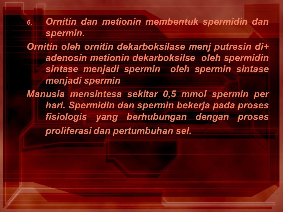 Ornitin dan metionin membentuk spermidin dan spermin.