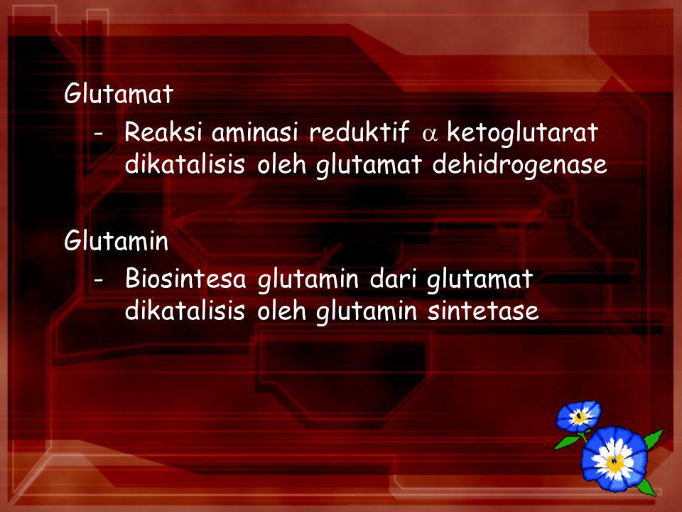Glutamat - Reaksi aminasi reduktif  ketoglutarat dikatalisis oleh glutamat dehidrogenase. Glutamin.