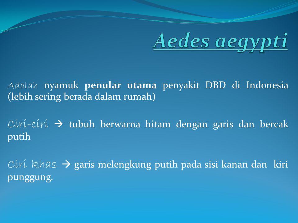 Aedes aegypti Adalah nyamuk penular utama penyakit DBD di Indonesia (lebih sering berada dalam rumah)