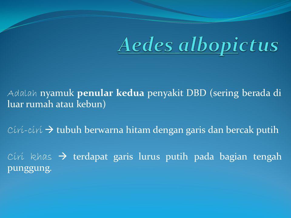Aedes albopictus Adalah nyamuk penular kedua penyakit DBD (sering berada di luar rumah atau kebun)